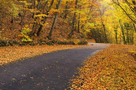 Straße im Herbst Wald. Herbstlandschaft