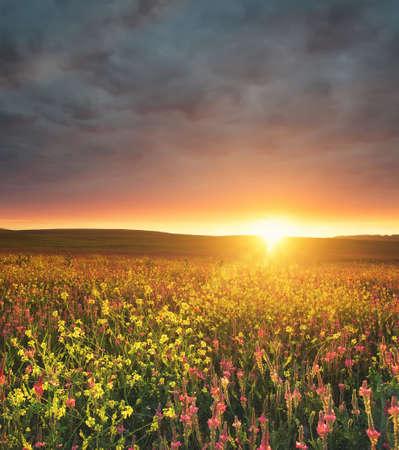 campo de flores: Campo con flores durante el ocaso. Hermoso paisaje de verano Foto de archivo