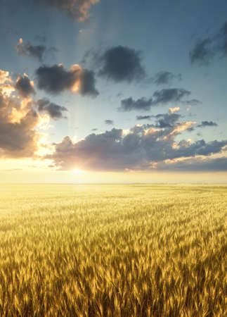 Field and sky during sunrise. Agricultural landscape in the summer time Stock Photo