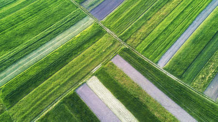 Rows on the field. Natural aerial landscape on the agricultural subject