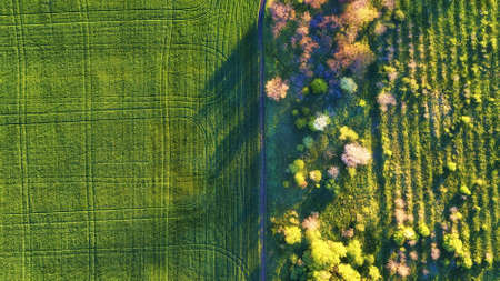 Aerial view at the garden and field. Agricultural landscape from air. Field and garden. Farm at summer time. Drone photography. Field and garden-image