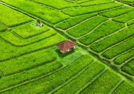 Aerial view of rice terraces. Landscape with drone. Agricultural landscape from the air. Rice terraces in the summer. - Jatiluwih rise terrace, Bali, Indonesia. Travel - image Фото со стока