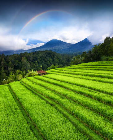 Aerial view of rice terraces and volcanoes. Landscape from drone. Agricultural landscape from the air. Rainbow above mountains.  Jatiluwih rise terrace, Bali, Indonesia. Travel - image Stock Photo