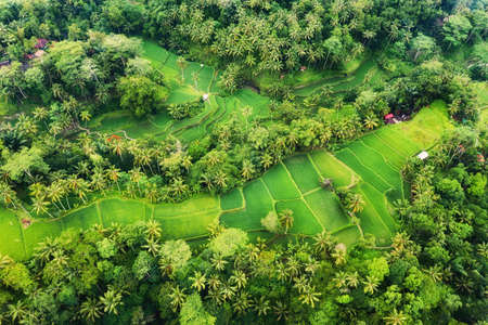 Aerial view of rice terraces. Landscape with drone. Agricultural landscape from the air. Rice terraces in the summer. Bali, Indonesia. Travel - image