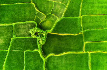 Aerial view on the rice terraces. Landscape from drone. Agricultural landscape from the air. Jatiluwih rise terraces, Bali, Indonesia. Travel - image