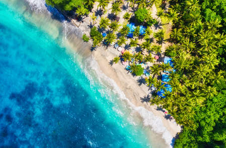Indonesia. Coast with palms as a background from top view. Turquoise water background from drone. Summer seascape from air. Travel - image