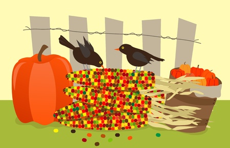 Colorful Corn and Birds - Vector illustration of small black birds standing on a pile of colorful corns, with pumpkins on each side  and a fence in the background  Document contains some transparency   Иллюстрация