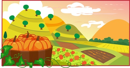 Pumpkin Field - Vector illustration of pumpkins in a barrel, with a view of a cultivated land  Eps10