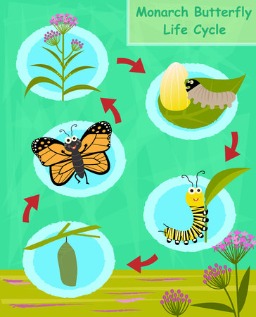 Colorful cartoon diagram of the monarch butterfly life cycle.