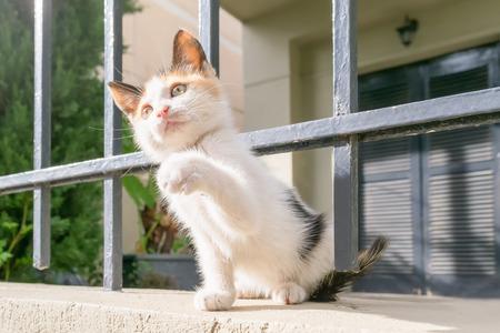 gato jugando: Perrito feliz gato jugando en el patio trasero.