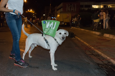 upcoming: Athens, Greece, 3 July 2015. Funny dog with a flag in his back about the upcoming referendum in Greece.