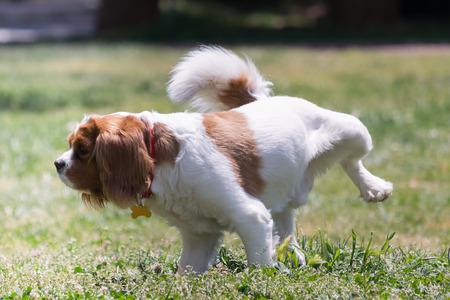 pee: Perro que hace pis en el parque.