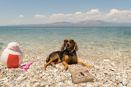 Dogs allowed on beach. A funny looking portrait with a dog wearing sunglasses reading the news. Stock Photo