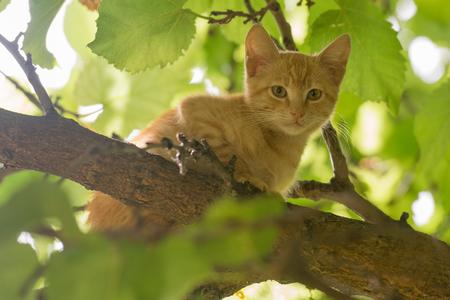 Schönes Porträt einer Babykatze auf einem Baum.