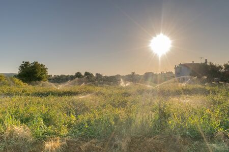 watered: Meadow getting watered against the sun rays.