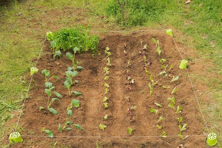 lettuces: Pretty little garden with planted lettuces and other vegetables.Pretty little garden with planted lettuces and other vegetables. Stock Photo