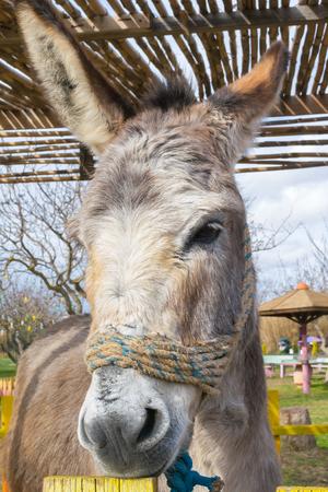 ears donkey: Close up of a donkey at a park Stock Photo