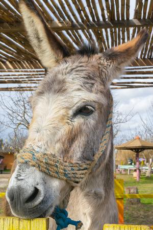 ears donkey: Donkey close up portrait at a park.