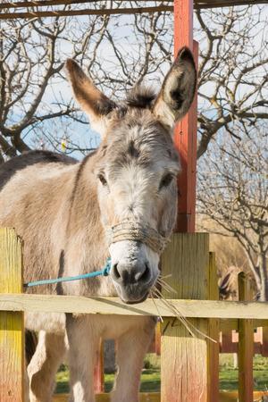 ears donkey: Beautiful portrait of a donkey at a park.