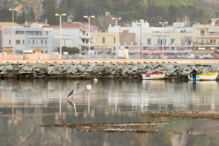 nafplio: White heron standing on his feet against the blurred old city of Nafplio in Greece.