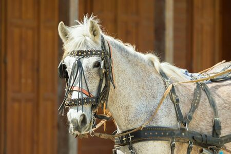 blinkers: Portrait of a horse at a ranch wearing halters and blinder.