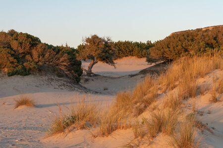 Golden hour at Simos beach in Greece. 스톡 콘텐츠