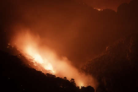 Close up look of a forest under fire. 스톡 콘텐츠