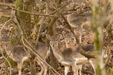 Deer group at a forest portrait. 스톡 콘텐츠