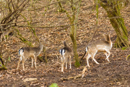 Deer running out in the nature at a forest. 스톡 콘텐츠
