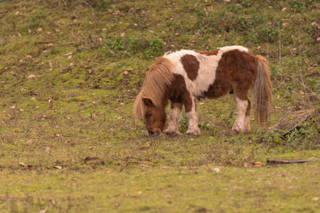 Little pony eating hay out in the nature. 스톡 콘텐츠
