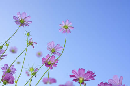 Pink flowers background sky photo
