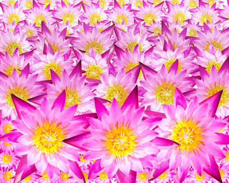 effloresce: Lotus flowers are stacked several layers. Stock Photo