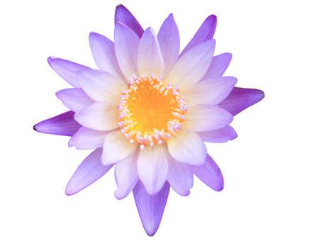 Lotus flower. Stock Photo - 11771521