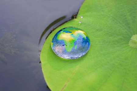 The world in a drop of water on a lotus leaf. photo