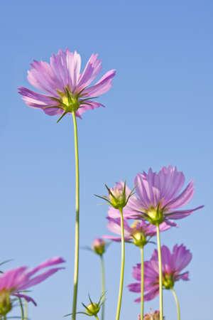 Beautiful pink flowers. photo