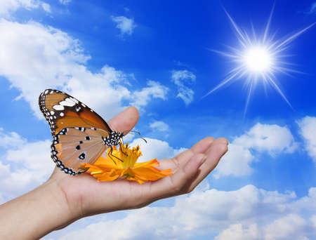 Hands down einer Blume, Schmetterling Hintergrund, nur der Himmel.