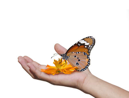 hands with butterflies Stock Photo