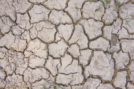 bleak: Dry soil and climate