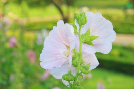 colorize: beautiful flowers