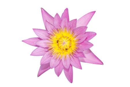 lotus flower on a white background  For a background image   photo