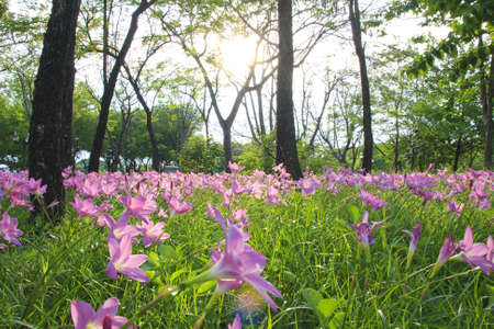 Light pink flowers, trees and evening. photo