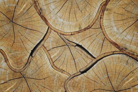 Hintergrund der trockenen teak logs oben auf einander in einem Haufen gestapelt