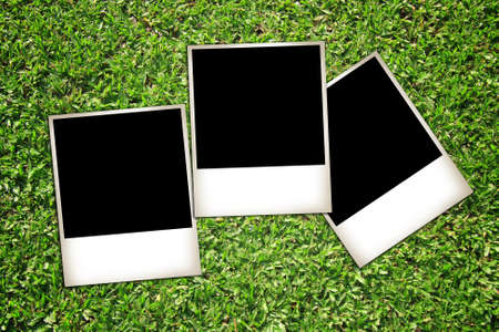 photos isolated on green grass background  photo