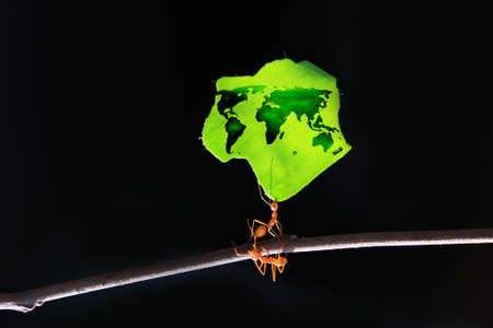Ants carrying the leaves with the world  photo