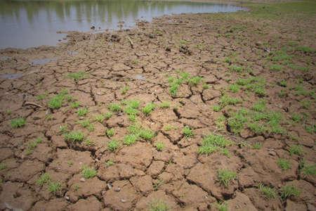 ou: Water the soil dry ou Stock Photo