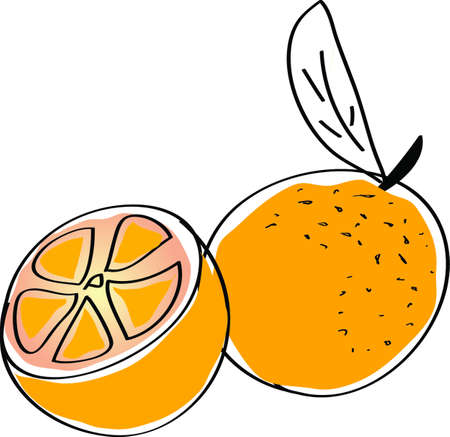 sliced fruit: vector Orange