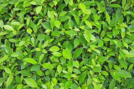 녹색 벽 배경 나뭇잎