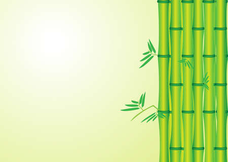 Bamboo green leaf, vector illustration  Vector