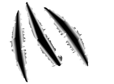 cartone strappato: gare di un artigli animali su sfondo di acciaio pronto per un testo Vettoriali