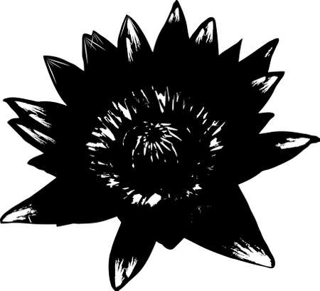 flower of lotus, black and white vector illustration  Vector